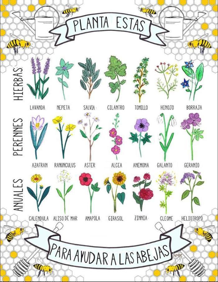 hierbas-abejas
